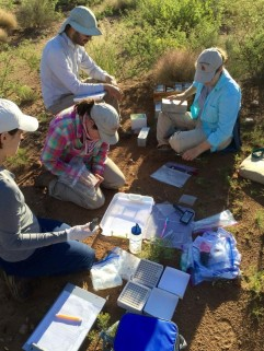Collecting fecal (and ectoparasite) samples